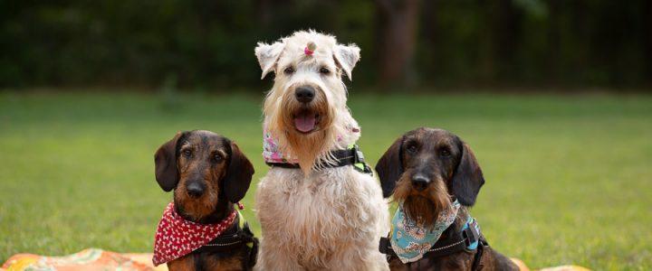 Képek a terápiás kutyákról